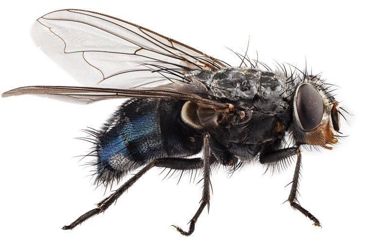 dedetizadora-pragas-moscas